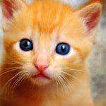 consejos que debes de tomar si quieres terner un gato, sugerencias que debes de tomar si quieres terner un gato,, recomendaciones que debes de tomar si quieres terner un gato, tips que debes de tomar si quieres terner un gato, ideas que debes de tomar si quieres terner un gato, informacion que debes de tomar si quieres terner un gato
