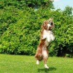 Entrenar a mascota en la casa, consejos para entrenar a mascota en la casa, datos para entrenar a mascota en la casa, ideas para entrenar a mascota en la casa, recomendaciones, tips para entrenar a mascota en la casa, ejemplos para entrenar a mascota en la casa