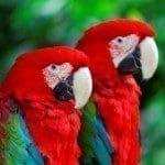 Lindas frases sobre el amor a los animales con imágenes