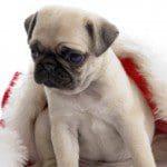 consejos para evitar que las mascotas tengan mal olor, sugerencias para evitar que las mascotas tengan mal olor, recomendaciones para evitar que las mascotas tengan mal olor, tips para evitar que las mascotas tengan mal olor, secretos para evitar que las mascotas tengan mal olor, datos para evitar que las mascotas tengan mal olor