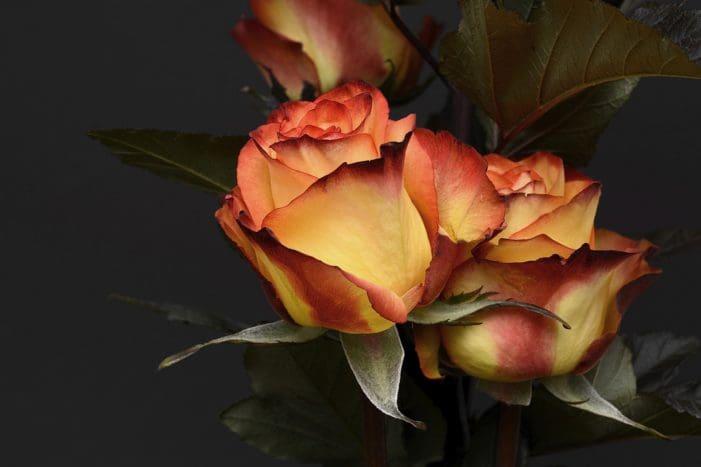 Buscar Mensajes De San Valentín│Lindas Frases De San Valentín